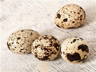 吃鹌鹑蛋有哪些好处
