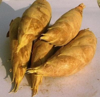 冬笋是冬季时令菜适当进食可防癌