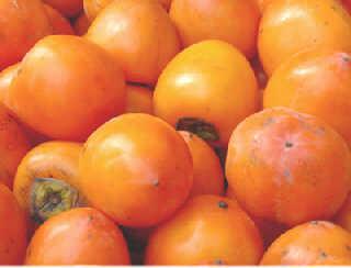秋季应该常吃五种水果
