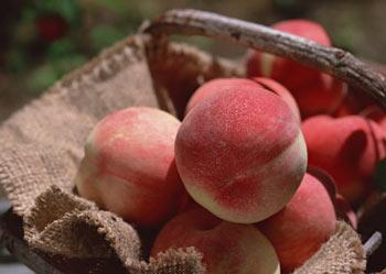 桃子不是谁都能吃