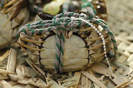 秋季吃螃蟹八项注意